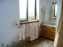 Example of Severe Mold Damage on Walls